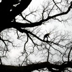 Man on tree limb