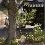 Pruning truck[2]